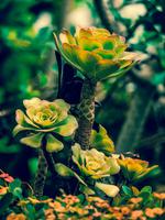 Succulent plants 01