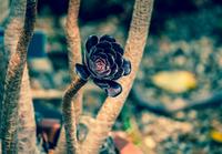 Succulent plant 02
