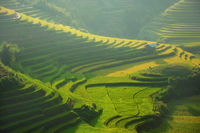 La Pan Tan rice terraces