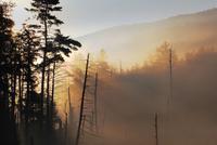 Smokey Morning
