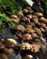 Mushroom 04/04