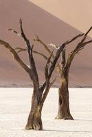 IvanM Dead Vlei Namibia