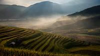 Terrace rice field - Tule