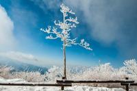 Frozen Survivor 11098062223| 写真素材・ストックフォト・画像・イラスト素材|アマナイメージズ