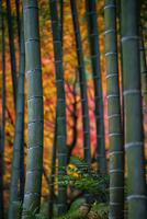 Bamboo Colors 11098063829| 写真素材・ストックフォト・画像・イラスト素材|アマナイメージズ