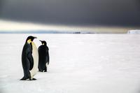 Emperors in Antarctica