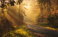 Sonne in Wald