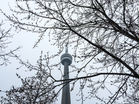 CN Tower caught in trees