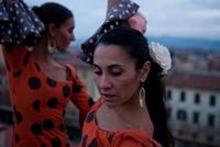 Flamenco 11098066097  写真素材・ストックフォト・画像・イラスト素材 アマナイメージズ