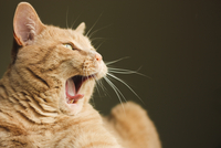 The yawning
