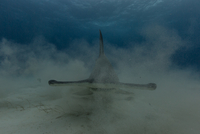 Hammerhead in the mist