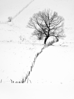 Rural landscape of fence and tree in winter with snow