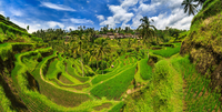 Sunny landscape of grass plantation