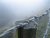 Frost on barbed wire fence at morning