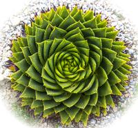 Close up of green cactus