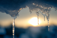 Close-up of icicles at sunset