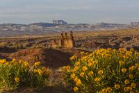 Flowers and rock formations in desert