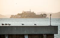 Seagulls perching on pier