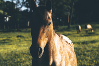 Portrait of horse in grass