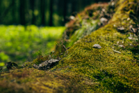 Moss growing on fallen tree in forest
