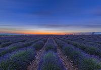 Blue flower field at sunset