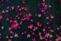 Overhead view of pink leaves on ground