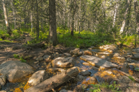 Rocky stream in forest in summer