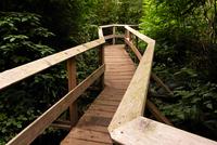 Wooden forest boardwalk
