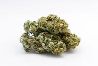 Studio shot of marijuana buds