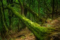 Moss on fallen tree in forest