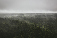 Fog over green forest