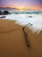Driftwood on sandy beach at sunset