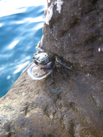 Crab sitting on rock