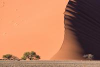 Sand dune with trees in desert