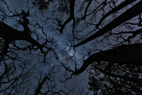 Bare tree tops against sky at night with stars