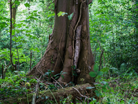 Tree trunk in lush forest