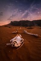 Bison skull and bones in desert at sunset