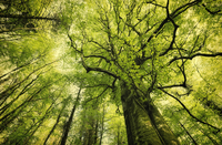 Tree tops in green forest