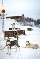 Three dogs resting outside during winter