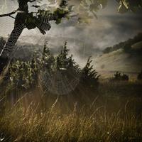 Cobweb over tall grass