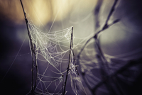 Close-up of cobweb on twigs