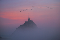 Sunset and flock of birds flying over Mt. St. Michel, Normandy, France