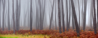 Forest in fog with grass in autumn