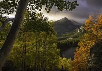 Mountain peak between trees