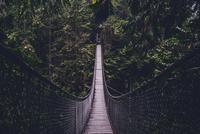 Rope bridge in forest