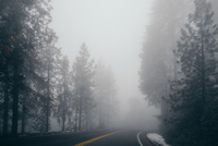 Road through forest in fog