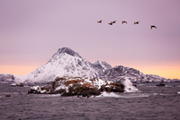 Flock of birds flying over snow-capped mountain