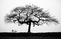 Silhouette of tree in field and bike