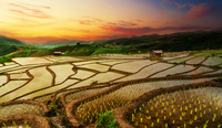 East Asian terraced rice paddies at sunset