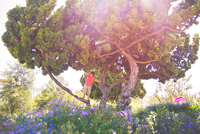 Young boy (6-7 years) climbing on tree, Los Angeles, California, USA